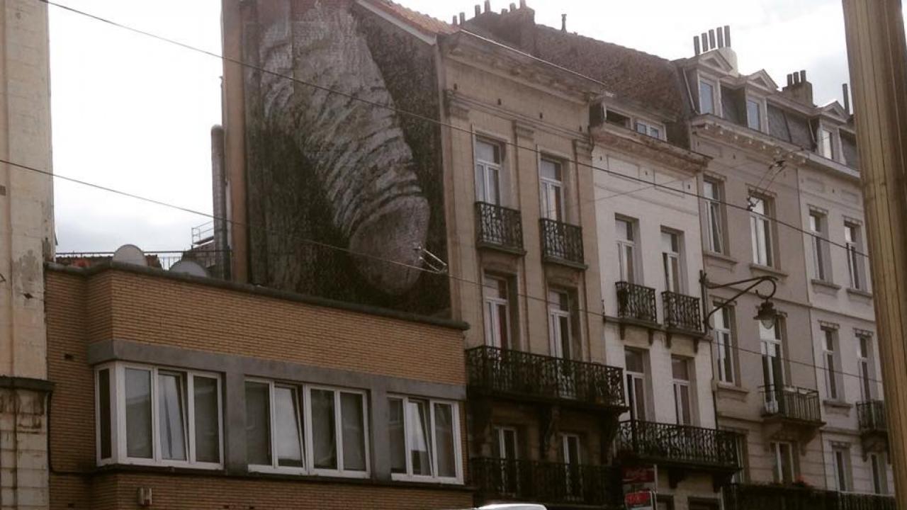 Seksueel getinte muurschilderingen zorgen voor ophef in Brussel